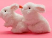 Screenshot from Lovehoneys TV Spot July 2016 with rabbits