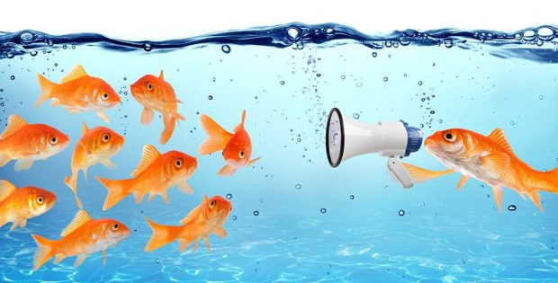 Fish with megaphone